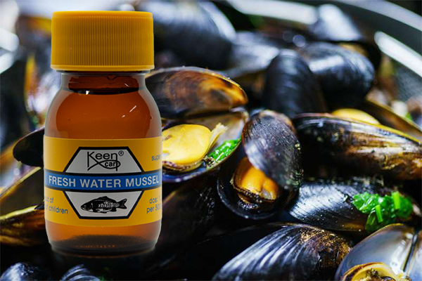 Fresh Water Mussel