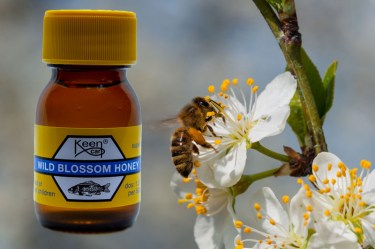 Wild Blossom Honey